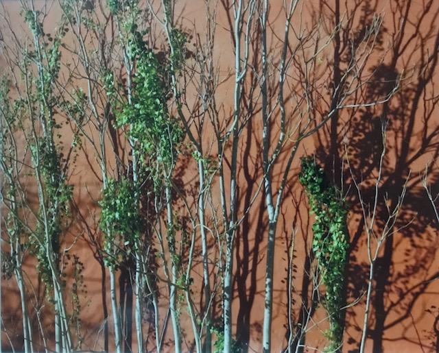 Mark Vicksburg Tree