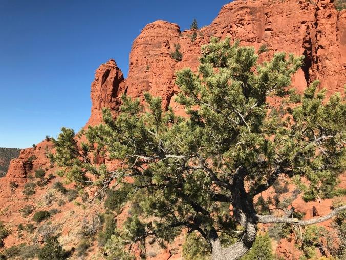 sedona tree