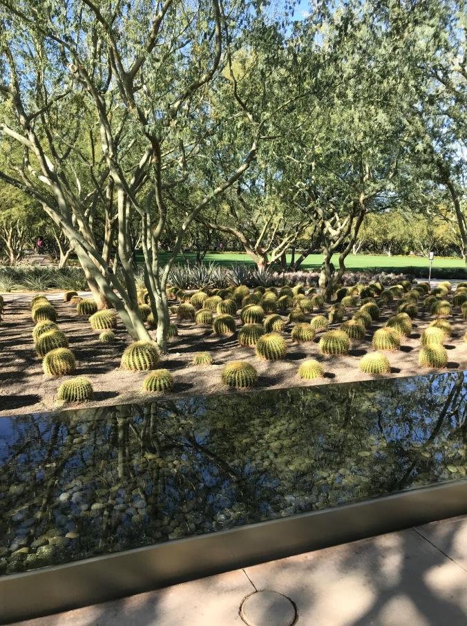 sunnylands tree